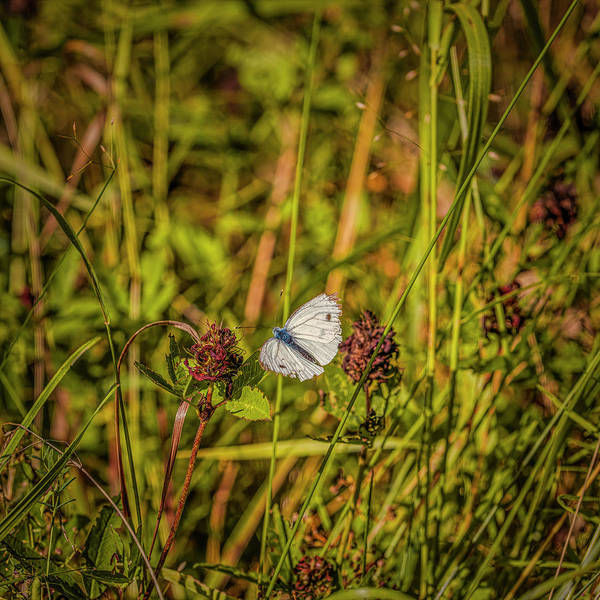 Wall Art - Photograph - Butterfly #i0 by Leif Sohlman
