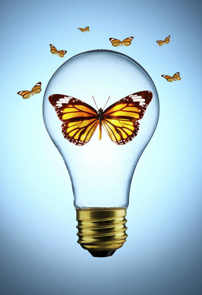 Environmental Issue Wall Art - Photograph - Butterfly In A Lightbulb by Chris Stein