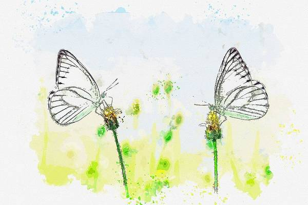 Wall Art - Painting - Butterfly Insect Macro Animal Nature Spring -  Watercolor By Adam Asar by Celestial Images