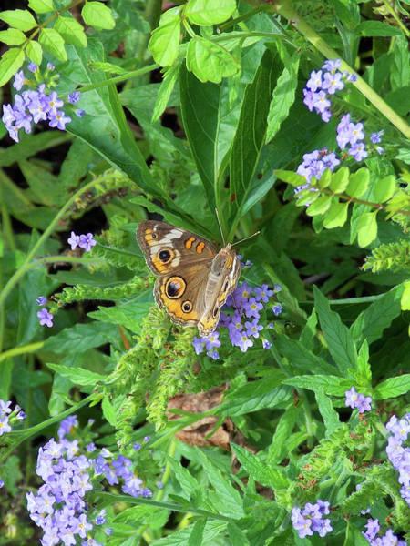 Photograph - Butterfly Love by Matthew Seufer