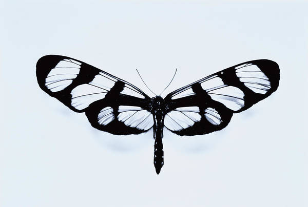 Trapped Photograph - Butterfly by Merton Gauster