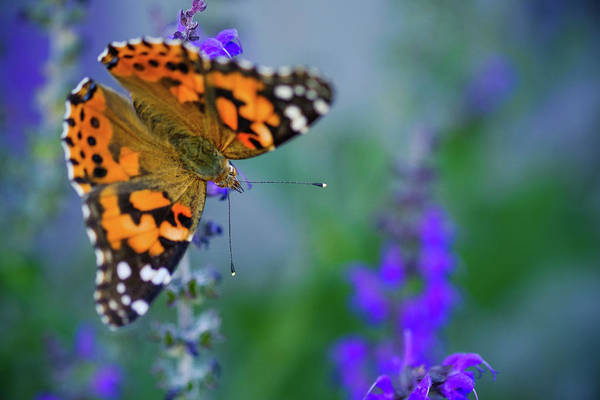 Photograph - Butterfly by Nicole Young