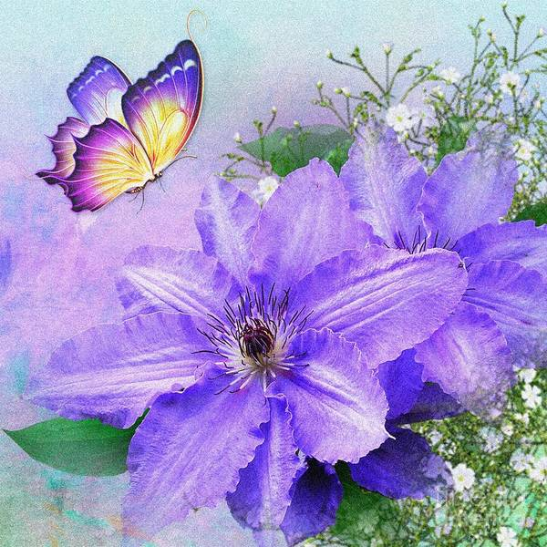 Mixed Media - Butterfly On Clematis by Morag Bates