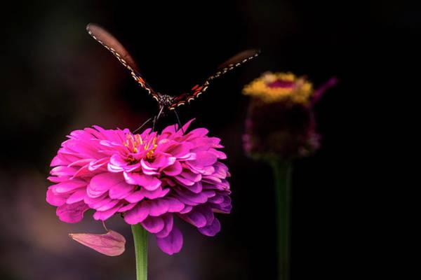 Photograph - Butterfly On Edge by Allin Sorenson