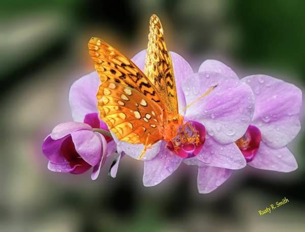 Digital Art - Butterfly On Purple Orchid. by Rusty R Smith
