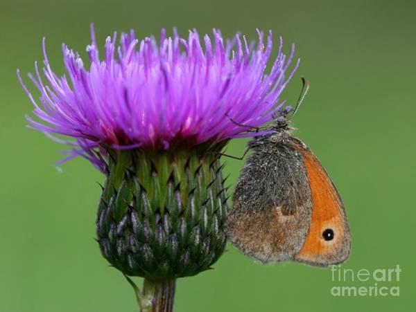 Natural Wall Art - Photograph - Butterfly On Thistle by Miroslav Hlavko