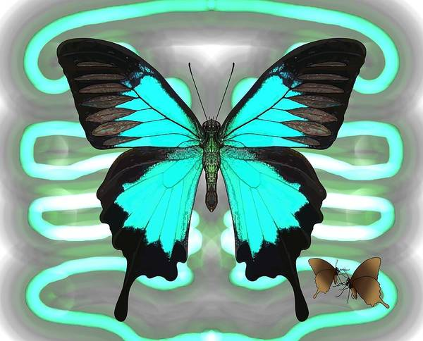 Drawing - Ulysses Butterfly Patterns Electric Blue Grey by Joan Stratton