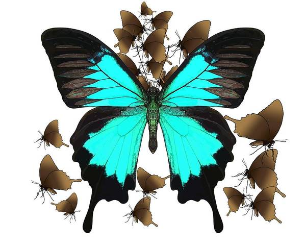 Wall Art - Drawing - Ulysses Butterfly All A Flutter by Joan Stratton