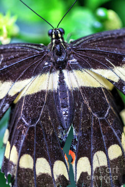 Photograph - Butterfly Prophecy by John Rizzuto