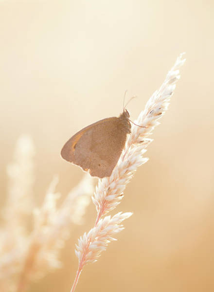 Wall Art - Photograph - Butterfly Resting On Grass On A Summer's Evening by Anita Nicholson