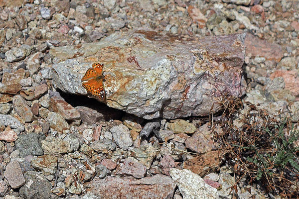 Photograph - Butterfly Rock by Chance Kafka