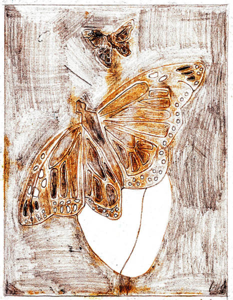Drawing - Butterfly Scratch Sketch 1 by Artist Dot