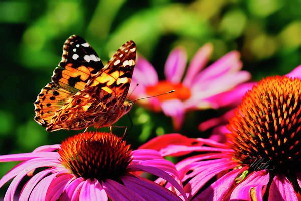 Photograph - Butterfly Side by Meta Gatschenberger