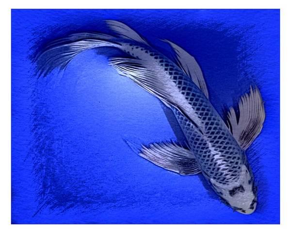 Digital Art - Butterfly Silver Blue Koi  by Scott Wallace Digital Designs