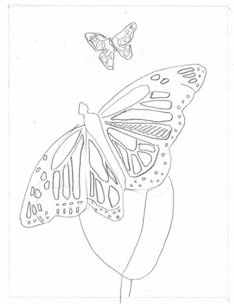 Drawing - Butterfly Starter Drawing 1 by Artist Dot