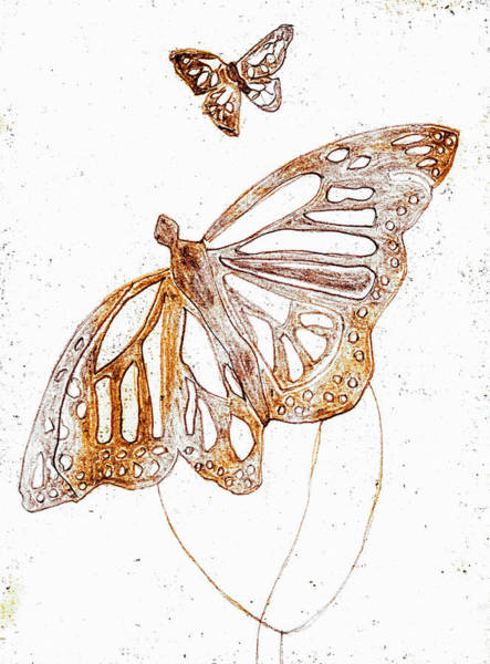 Drawing - Butterfly Starter Drawing 3 by Artist Dot