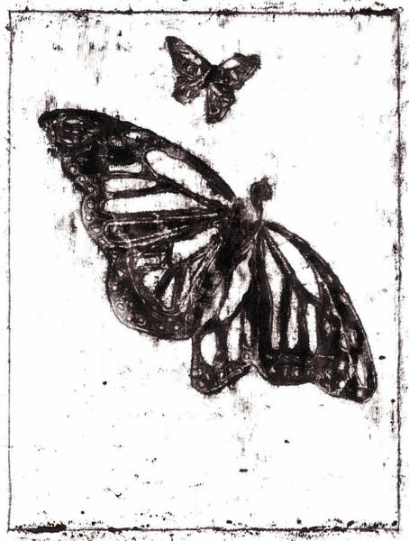 Drawing - Butterfly Starter Drawing 4 by Artist Dot