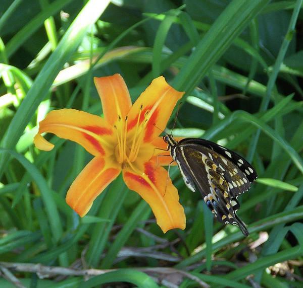 Photograph - Butterfly Sunday by Matthew Seufer