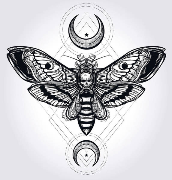 Wall Art - Digital Art - Butterfly - Vector by Caids Ados