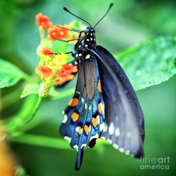 Photograph - Butterfly Wing Spots by John Rizzuto