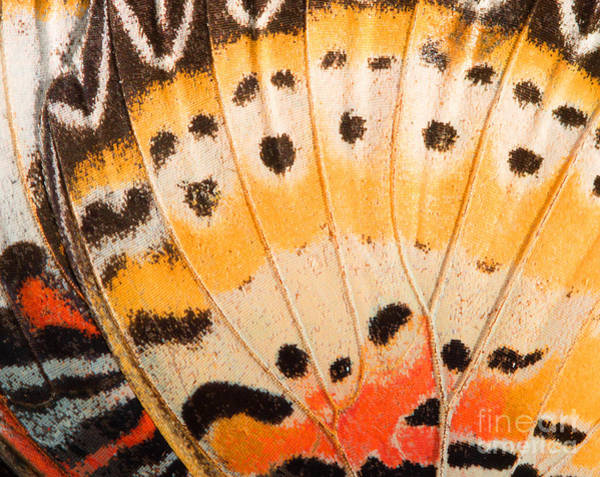 Wall Art - Photograph - Butterfly Wing Texture, Close Up Of by Wanchai