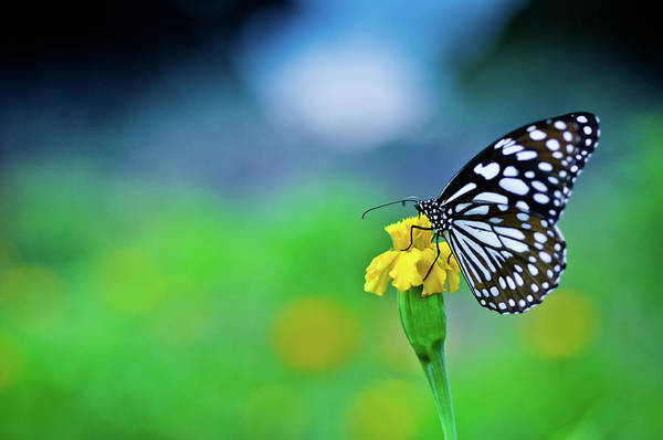 Wall Art - Photograph - Butterfly With Wild Flowers In Garden by Ashik Masud
