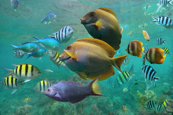 Wall Art - Photograph - Butterflyfish, Damselfish, Sergeant by Tim Fitzharris