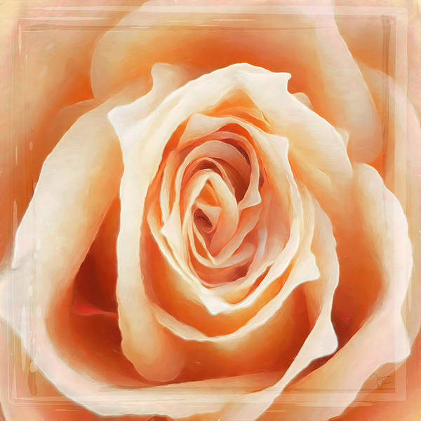 Photograph - Butterscotch Beauty By Teresa Wilson by Teresa Wilson
