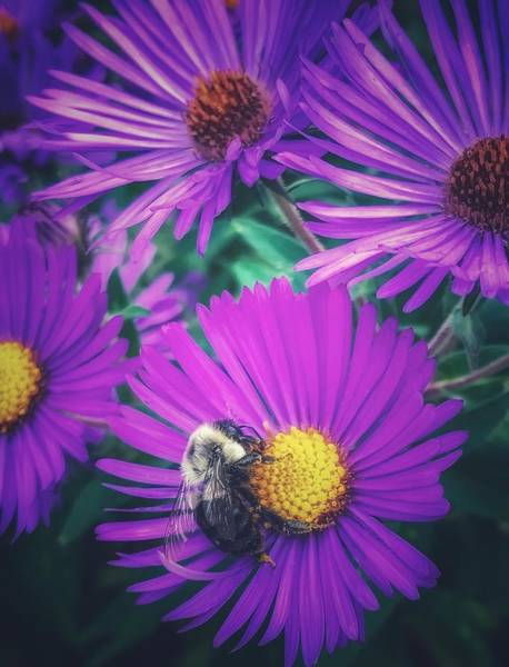 Photograph - Buzz by Shannon Kelly