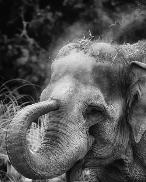 Photograph - Bwelephant by Chris Boulton