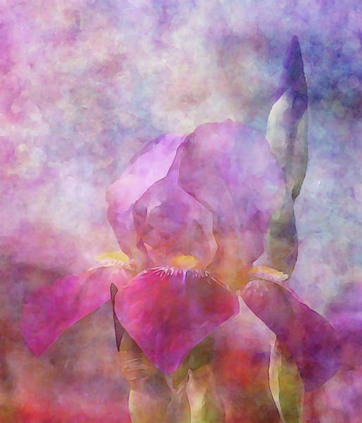Photograph - By The Drive 6797 Idp_2 by Steven Ward
