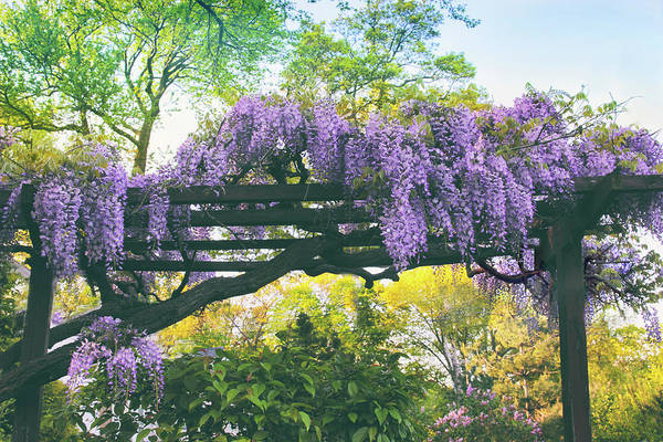 Wall Art - Photograph - A Whiff Of Wisteria   by Jessica Jenney