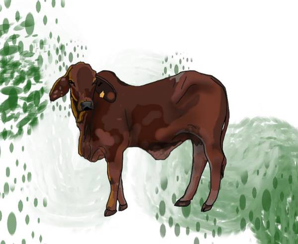 Drawing - C Is For Cow by Joan Stratton