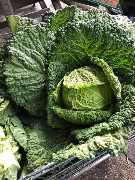 Photograph - Cabbage Head by Lesa Fine