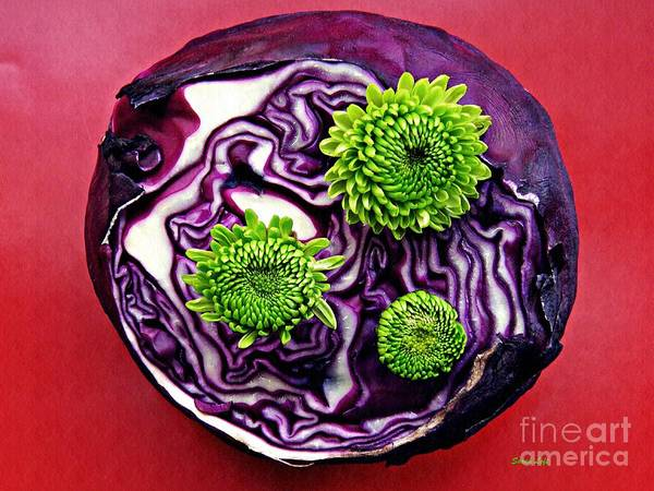 Wall Art - Photograph - Cabbage Patch by Sarah Loft