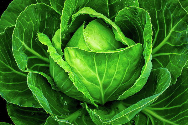 Photograph - Cabbage Up Close by Gary Slawsky
