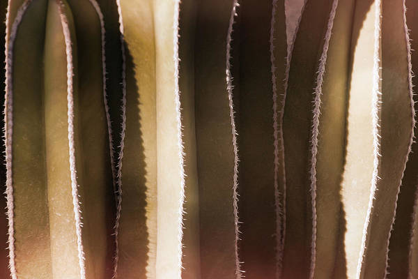 Photograph - Cacti Abstraction I by Leda Robertson