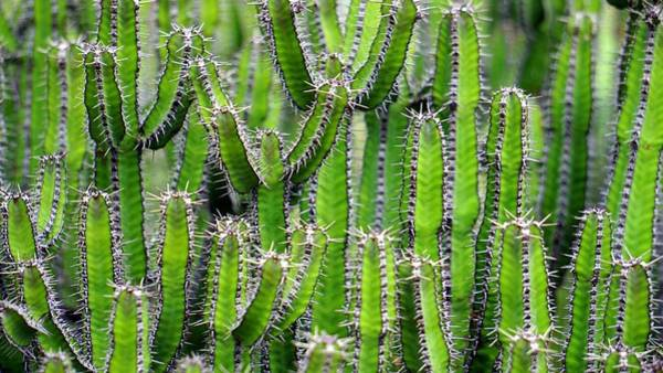 Photograph - Cacti Wall by Top Wallpapers