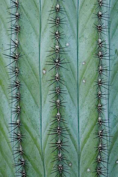 Photograph - Cactus Abstract by KJ Swan