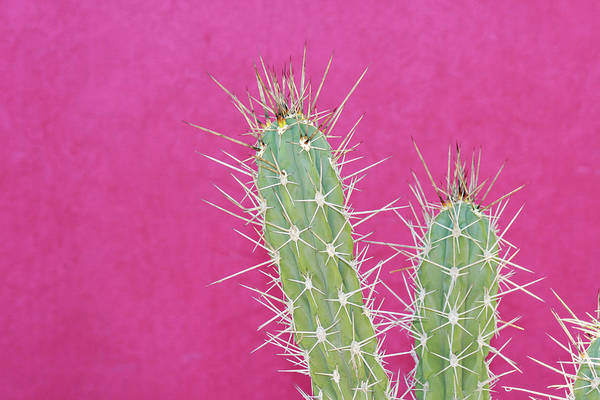 Protection Photograph - Cactus Against A Bright Pink Wall by Tracy A. Flaming
