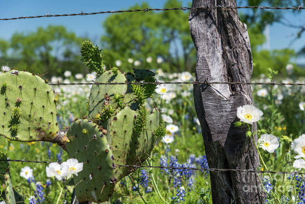 Photograph - Cactus And Wildflowers by Paul Quinn