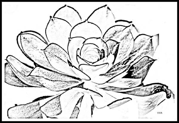 Digital Art - Cactus - B- W  -collabration by VIVA Anderson