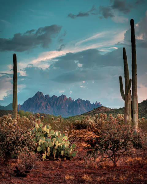 Photograph - Cactus Cactus Cactus by Laura Hedien
