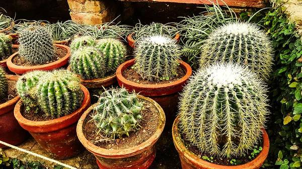 Photograph - Cactus Collection by AE collections