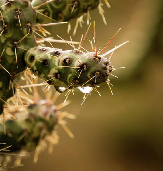 Cactus Detail Art Print