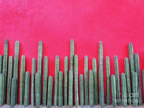 Wall Art - Photograph - Cactus Fence by Diana Rajala