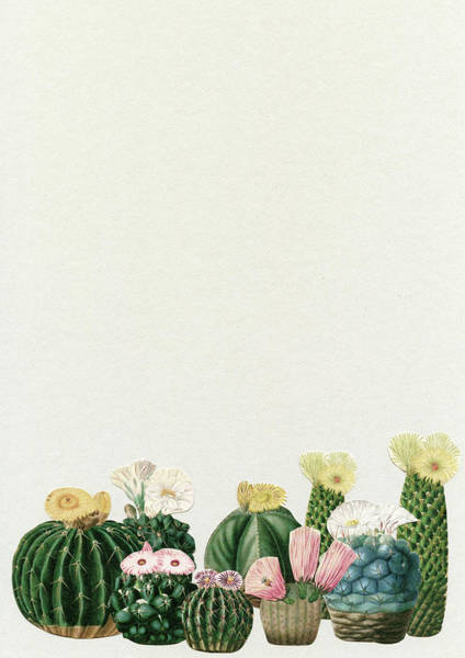 Teal Mixed Media - Cactus Garden by Cassia Beck