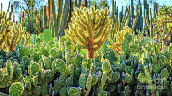 Photograph - Cactus Garden Phoenix Arizona by Edward Fielding