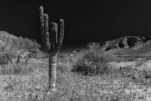 Photograph - Cactus In The Desert by Silvia Marcoschamer