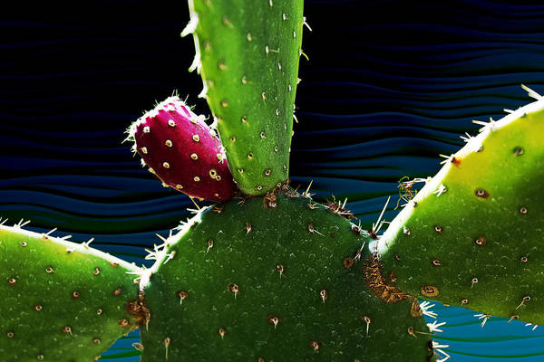 Photograph - Cactus Needs A Hug by Debi Dalio